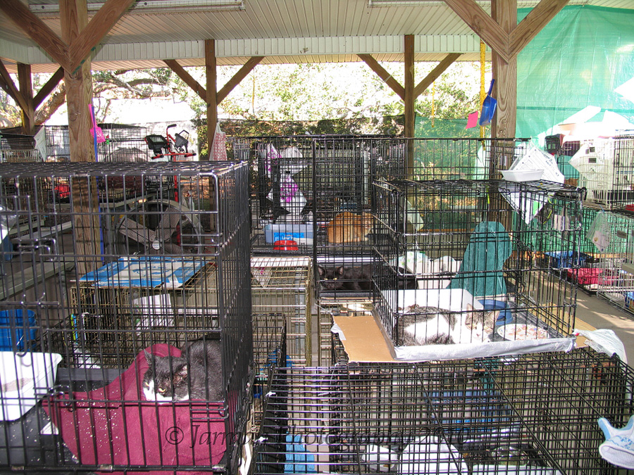 cattery filled