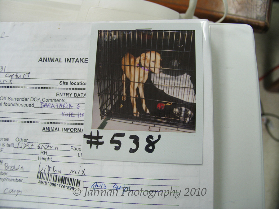 Poloroids taken of rescued animals